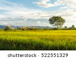 landscape of rice field and... | Shutterstock . vector #522551329