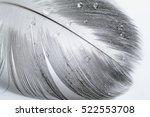 Goose Bird Feather Wing Closeu...