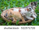 cute tabby kittens in a basket. ... | Shutterstock . vector #522571720