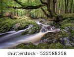 Oak Tree With River