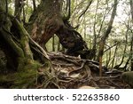 big hollow tree and roots ... | Shutterstock . vector #522635860