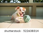 Dog Baby Jack Russell Terrier...