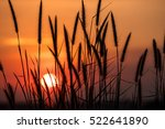 Silhouette Of Grass Flower In...