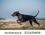 Doberman Outdoor