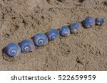 purple snails on the wet sea... | Shutterstock . vector #522659959