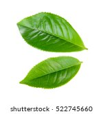green tea leaf isolated on... | Shutterstock . vector #522745660