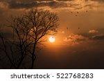 Silhouette Dead Tree Against...
