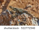 stellion lizard  | Shutterstock . vector #522772540