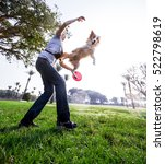Stock photo a border collie dog playing with its owner on a frisk morning in the park 522798619