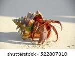 Red Hermit Crab With Pinchers...
