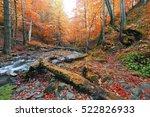 Picturesque Gold Autumn Image ...
