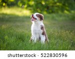 Stock photo cute funny little puppy 522830596