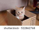 Ginger Tomcat In The Paper Box