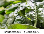 close up of fresh harvested... | Shutterstock . vector #522865873