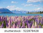 beautiful lupine flower in lake ... | Shutterstock . vector #522878428