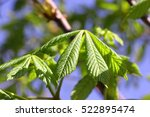 Small photo of Chestnut against the background of the blue sky a close up Horizontally. Juicy green leaves of the Chestnut in the spring. The background is vegetable. Castanea. Fagaceae Family.Castaneoideae.Fagales