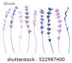 lavender flowers hand drawn... | Shutterstock .eps vector #522987400