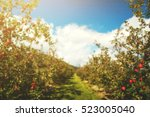 Blurred Of Row Apple Orchard...