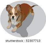 little dog   Shutterstock . vector #52307713
