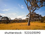 A Beautiful Australian Meadow...