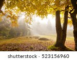 the sun's rays shine through... | Shutterstock . vector #523156960