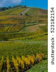 Small photo of Alsace Vineyards, in autumn, France, Europe