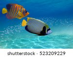 coral reef and tropical fish in ... | Shutterstock . vector #523209229