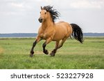 Stock photo beautiful bay horse 523227928