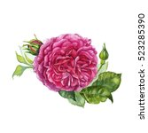 watercolor hand painted rose.... | Shutterstock . vector #523285390