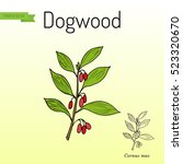 branch of dogwood plant with... | Shutterstock .eps vector #523320670