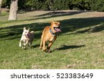 Stock photo dogs playing and running around on the park s grass having quality time with their owner 523383649