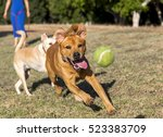 Dogs Playing And Running Aroun...