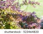 branches of an ornamental shrub   Shutterstock . vector #523464820