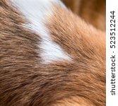 dog fur background  | Shutterstock . vector #523512244