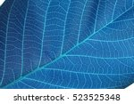 Abstract Blue Leaf Macro...