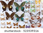 butterfly collection | Shutterstock . vector #523539316