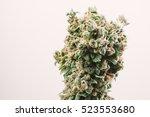 big bud marijuana cannabis plant | Shutterstock . vector #523553680