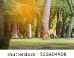 deer eating the grass on the