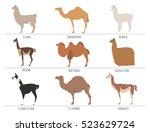 Camel  Llama  Guanaco  Alpaca...