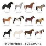 Stock vector horse breeding isolated icon set with mustang paso pinto stallion farm animal flat design 523629748