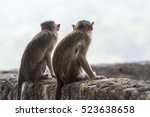 Backside Of Two Indian Monkeys...