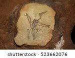Pterodactyl Fossil, Pterodactilus Spectabilis, Fossil of prehistoric animals, Fossil trilobite imprint in the sediment, Dinosaur fossil