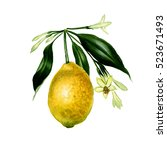 branch of watercolor  lemon...   Shutterstock . vector #523671493