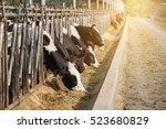 Close Up Of Cows In A Farm With ...