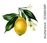 fresh watercolor lemon with...   Shutterstock . vector #523682389