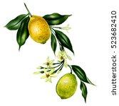 big watercolor branch of lemon...   Shutterstock . vector #523682410