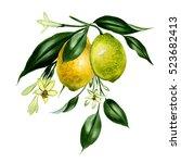 branch of watercolor fresh...   Shutterstock . vector #523682413