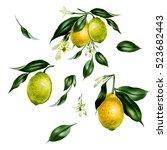 watercolor set of lemon...   Shutterstock . vector #523682443