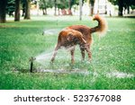 Dog And Watering The Lawn