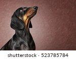 Drawing Dog Breed Dachshund...